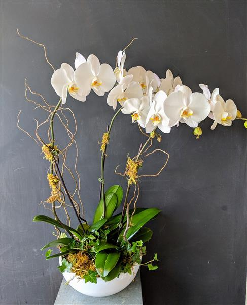 Mammoth White Orchids Bowl